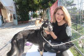 Başına geçirdiği plastik bidon sebebiyle aç susuz bitkin düşen sokak köpeği sağlığına kavuştu