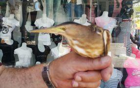 Duyarlı vatandaşların ihbarı yaban kuşlarını kurtardı