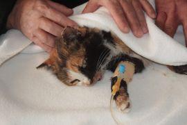 Zehirlenen sokak kedisi tedavi altına alındı