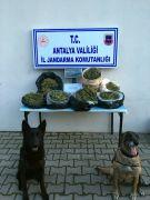 Korkuteli'nde 6 kilo kubar esrar ele geçirildi