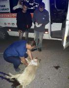 Otomobilin çarptığı sokak köpeğine kalp masajı