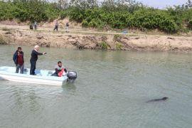 Sütten yeni kesilen yavru Akdeniz foku, avlanmak isterken kendini Aksu Çayı'nda buldu