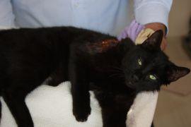 Antalya'da kediye pompalı saldırı iddiası