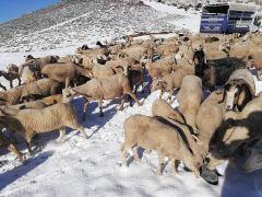 Antalya'da yaylalar Mayıs ayında beyaza büründü