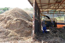 Kimyasala karşı kompost