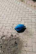 Maviye boyanan kara kaplumbağasıyla ilgili soruşturma