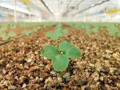 3 milyon tohum toprakla buluştu