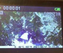Tanesi 10-15 TL'den satılan Avokado bahçelerine dadanan hırsızlar üreticiyi bezdirdi